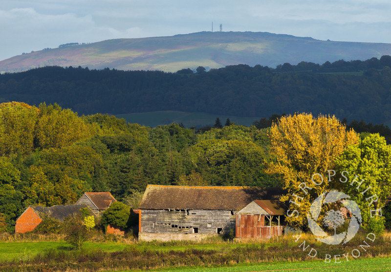 Autumn colour surrounds an old barn near Bromfield beneath Brown Clee Hill, Shropshire.