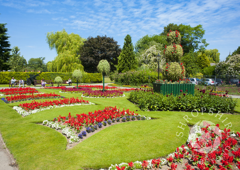 Summer flowers in Cae Glas Park, Oswestry, Shropshire, England