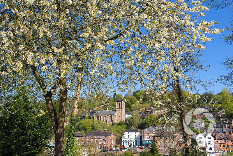 Spring blossom at Ironbridge, Shropshire, England.