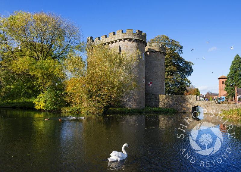 A swan glides across the moat at Whittington Castle, near Oswestry, Shropshire, England.