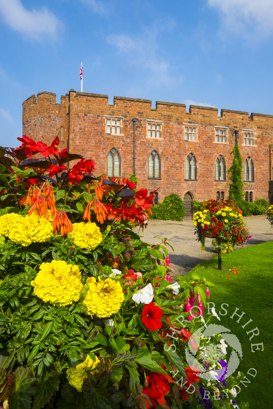 Summer colour at Shrewsbury Castle, Shropshire.