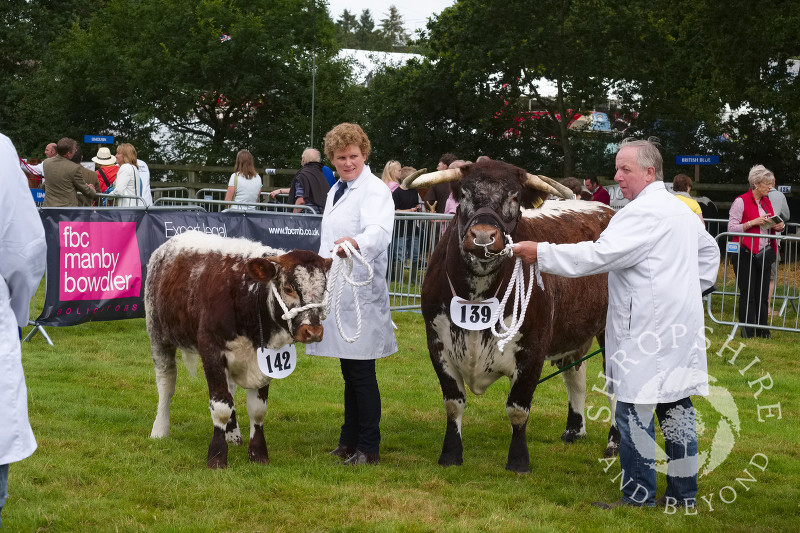Longhorn cattle in the parade ring at Burwarton Show, near Bridgnorth, Shropshire, England.