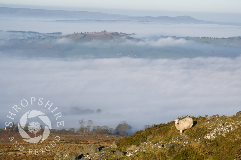 A sea of mist covers the south Shropshire landscape, seen from TItterstone Clee, with the Stretton Hills in the distance.