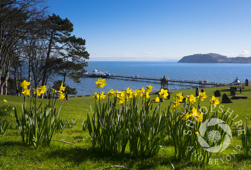 Springtime in Happy Valley Gardens, Llandudno, Wales.