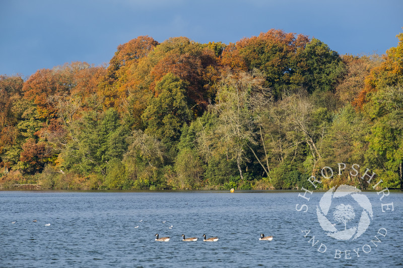 Autumn colour at Colemere, near Ellesmere in Shropshire.