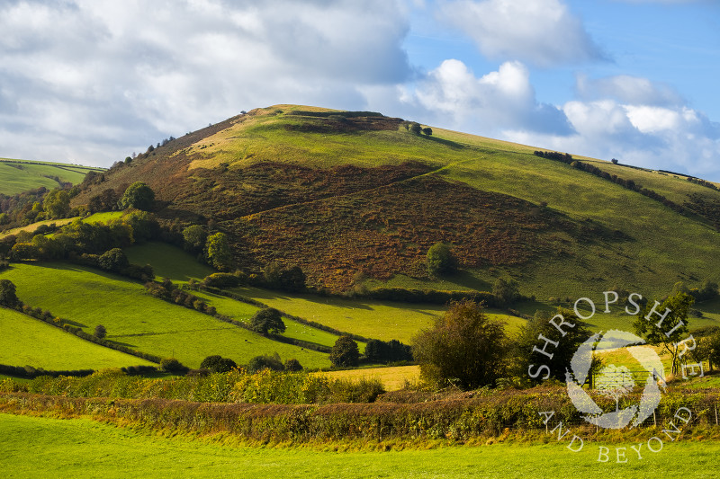Autumn sunshine on Caer Caradoc Iron Age hill fort near Chapel Lawn, Clun, Shropshire.