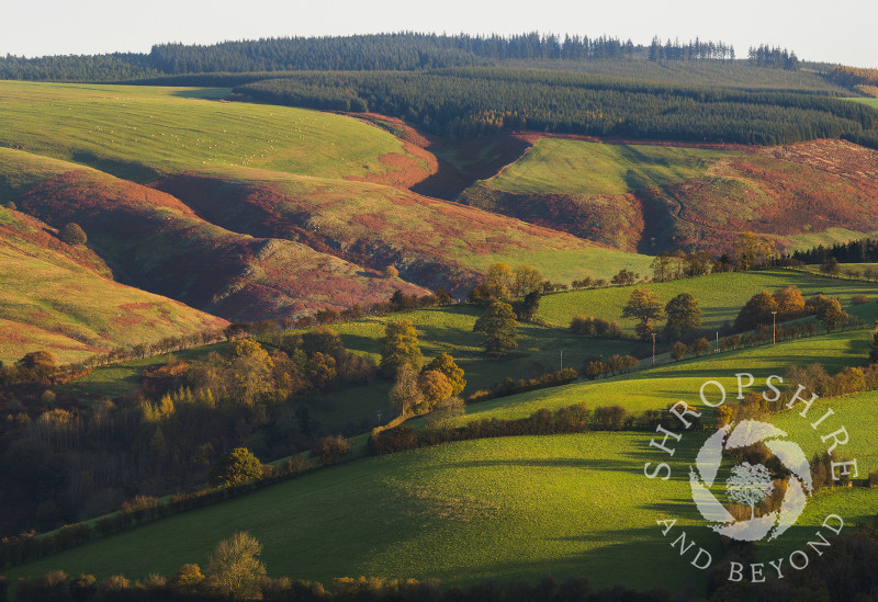 Early morning light on the Long Mynd, seen from Burrow Hill, Shropshire.